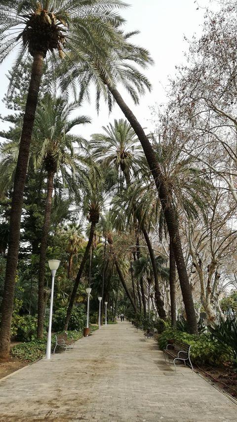 Palmeras parque Andrés Flores